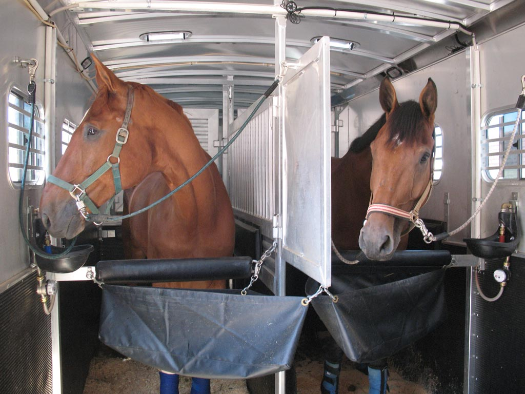 Get horse shipping bids from transporters who will keep the proper temperature during transit